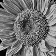 Classic Black And White Sunflower Art Print