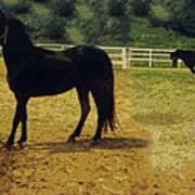 Classic Morgan Horses Art Print