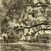 Classic Southern Beauty - Evergreen Plantation -sepia Art Print