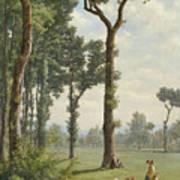 Clearance In An Oak Forest Art Print