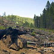 Clearcut Logging Site Art Print