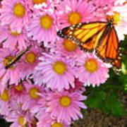 Cliff House Butterflies Art Print