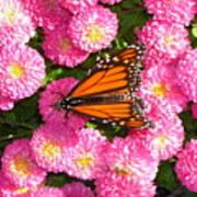 Cliff House Butterflies Ll Art Print