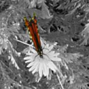 Cliff House Butterflies Lll Art Print