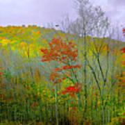 Climb Into Autumn Art Print