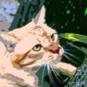 Climbing Cat Art Print