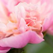 Close Up Macro Peony Flower Art Print