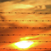 Close-up Of Barbed Wire At Sunset  Art Print