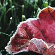 Close Up Of Leaf And Frost Art Print