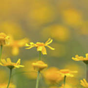 Close Up Of Yellow Flower With Blur Background Art Print