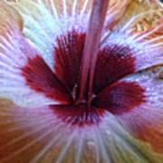 Close-up On Nature Art Print