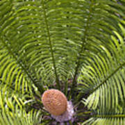 Close-up Palm Leaves Art Print