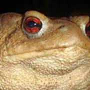 Close Up Portrait Of A Common Toad Art Print