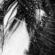 Close Up Portrait Of A Horse In Falling Snow Art Print