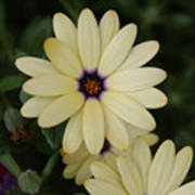 Close View Of A Flower Art Print