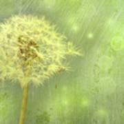 Closeup Of Dandelion With Seeds Art Print
