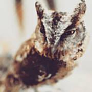 Closeup Portrait Of A Young Owl Looking At The Camera Art Print