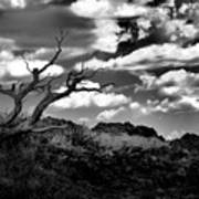 Clouds And A Tree Baw Art Print