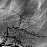 Clouds And Branches Art Print
