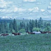 Clouds And Horses Art Print