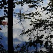 Clouds Tree Water Art Print