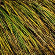 Clump Of Grass Texture Art Print