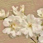 Cluster Of White Roses Posterized Art Print