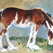 Clydesdale Colt Pad Art Print