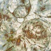 Cobblestoned Disrobed  Id 16098-000717-06400 Art Print