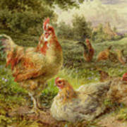 Cochin China Fowls Art Print