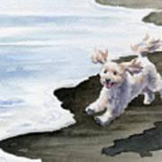 Cockapoo At The Beach Art Print