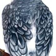 Cockatiel 1 Art Print