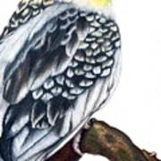 Cockatiel 2 Art Print