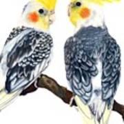 Cockatiels Art Print