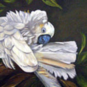 Cockatoo Preening Art Print