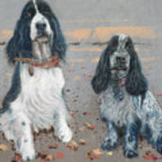 Cocker Spaniels Art Print