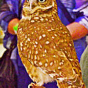 Coco The Burrowing Owl In Living Desert Zoo And Gardens In Palm Desert-california Art Print