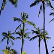 Coconut Grove At Wailua Art Print