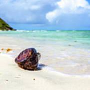 Coconut On The Beach Art Print