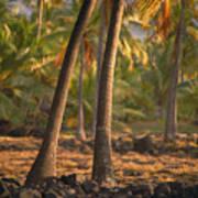 Coconut Palm Grove Art Print