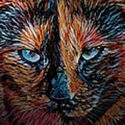 Coconut The Feral Cat Art Print