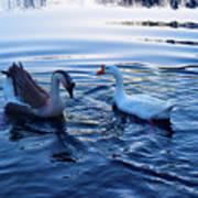 Cold Morning Swim 2 Art Print