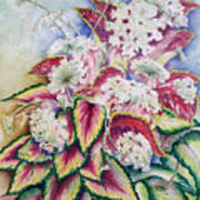 Coleus And Queen Anne Art Print