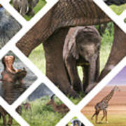 Collage Of Animals From Tanzania Art Print