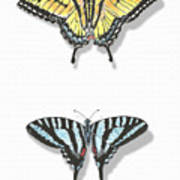 Collection Of Two Butterflies Art Print