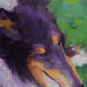 Collie Girl Siena Art Print