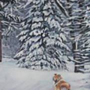 Collie Sable Christmas Tree Art Print