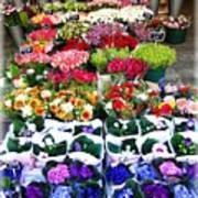 Cologne Flowers Art Print