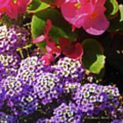 Color Combination Flowers Cc63 Art Print