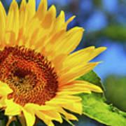 Color Me Happy Sunflower Art Print